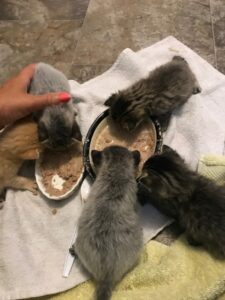 Hungry Kittens