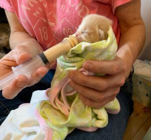 4-7-21 Heather_Mamacita_Baby Runt
